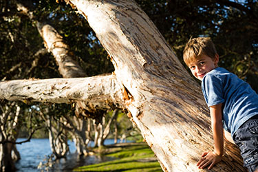 Boy climbing tree hanging over Lake Ainsworth