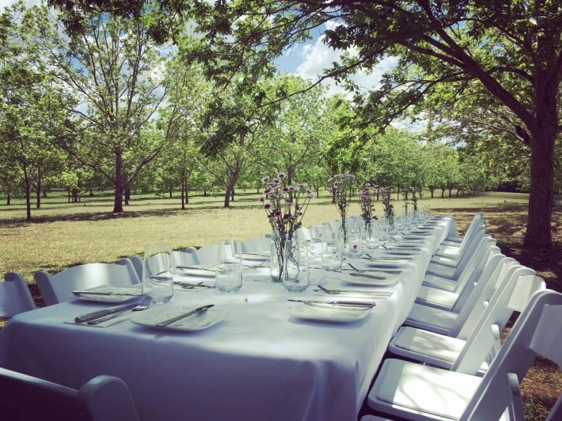 Dining in Pecan orchard resized