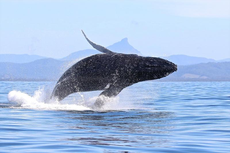 Blue Bay Whale Watching - Blue Bay Divers